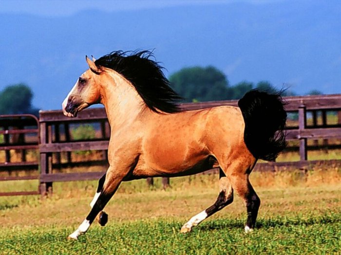 Foto de cavalo lindo