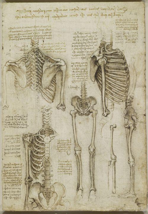desenho de Leonardo Da Vincidesenho de Leonardo Da Vinci