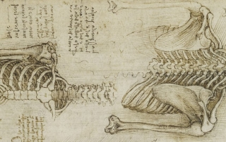 Desenhos de Leonardo Da Vinci
