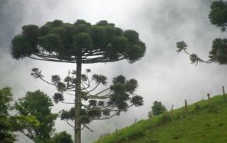 Árvore e sementes