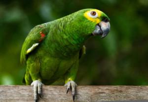 piada do papagaio do puteiro