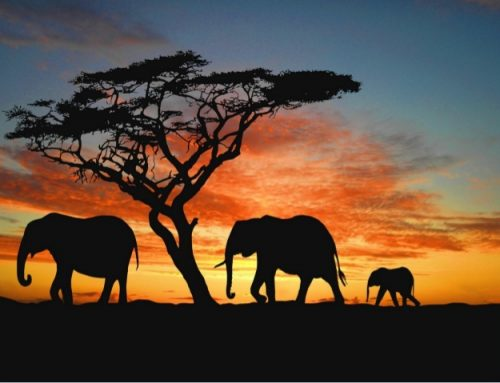 Sonhos Elefantes – por Allan Dias Castro